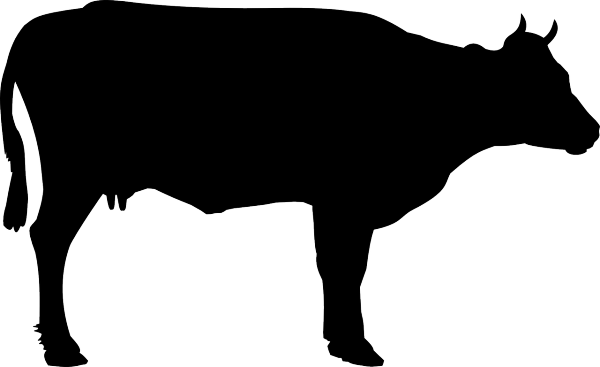 cattle-156498_1280